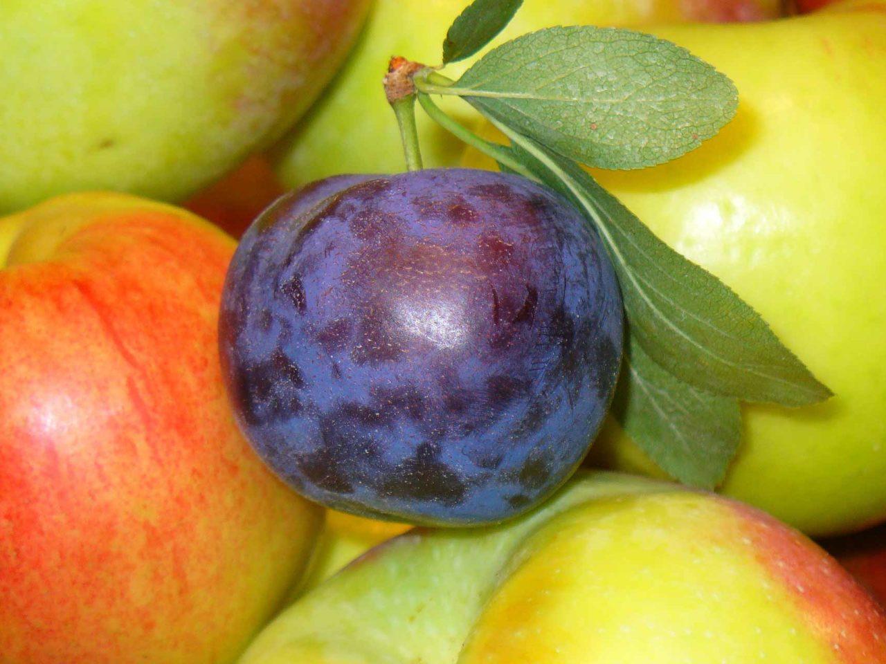 fruits-1868977_1920