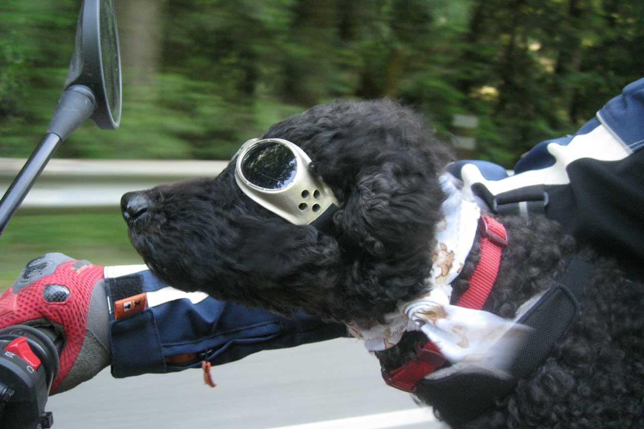 dog-173556_1280